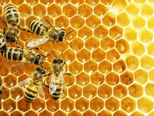 bảo quản mật ong